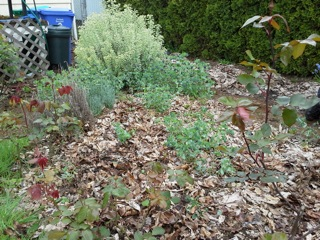 picture of garden bed covered in leaves