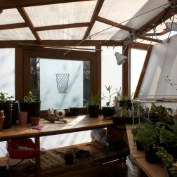 picture of inside my greenhouse