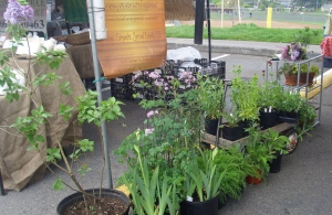 Petal Passion's garden plants at the farmer's market in Hillsdale