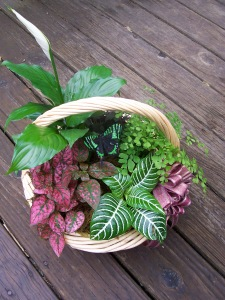 plant basket with low light tolerant house plants