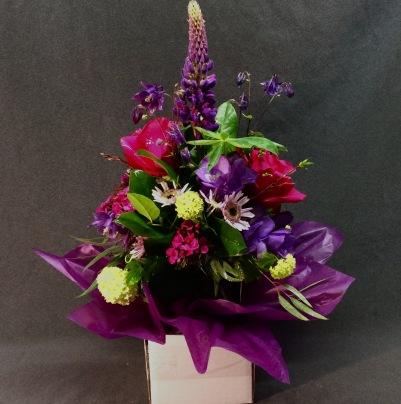 wrapped-purple-ifo-gray