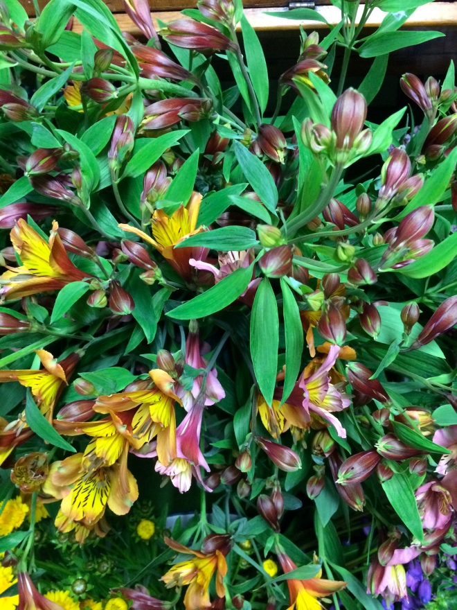 picture of Alstroemeria