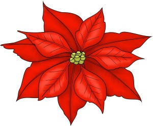 drawing of poinsettia bracts