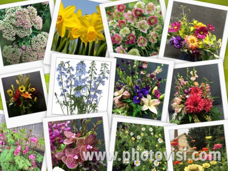 collage of flower pictures