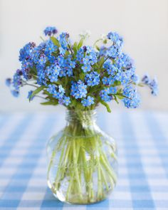 vase with forget me nots