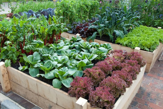 picture of vegetable bed