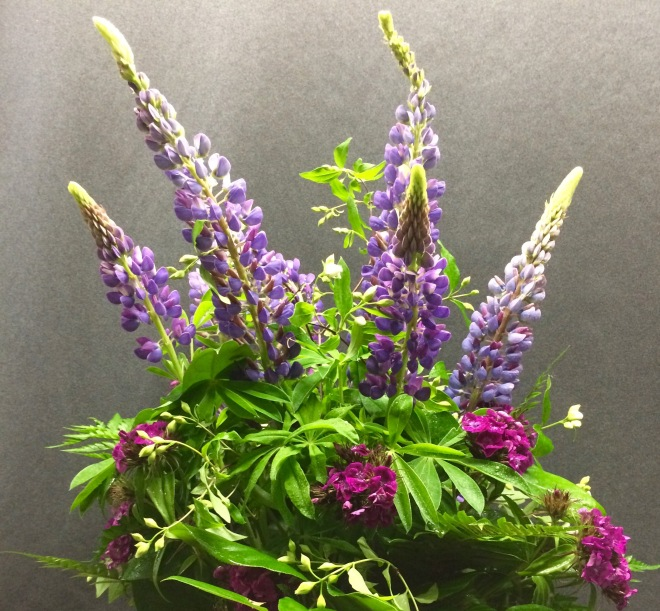 Lupines, sweet william