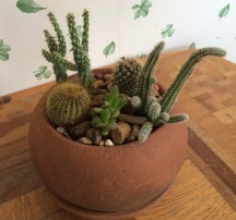 Cacti in terra cotta pot $22.50