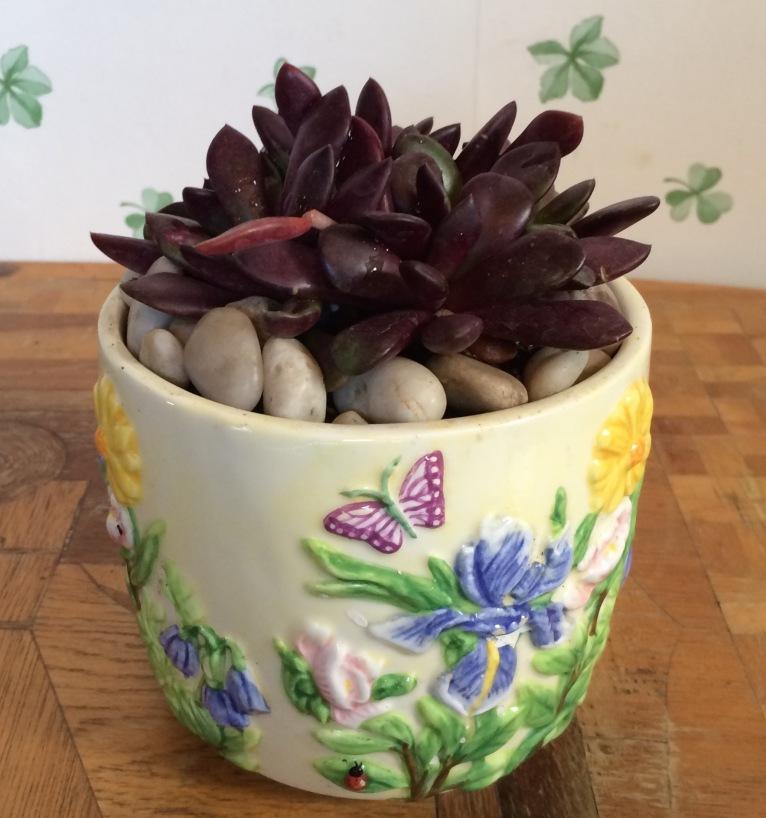 Succulent in ceramic springtime pot