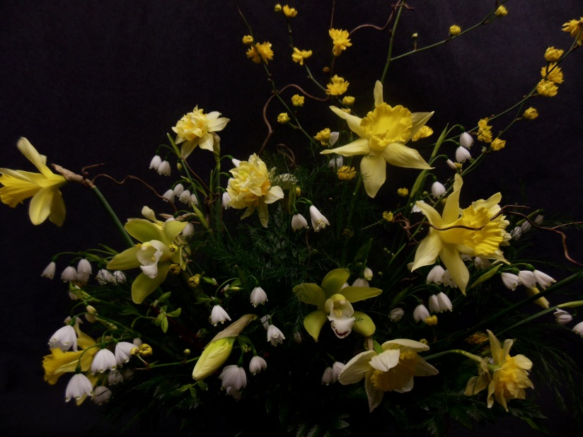 Narcissus, Daffodils, Jonquil, Happy sights of SpringDelight.
