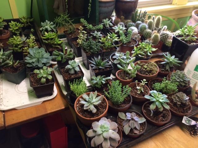 A few succulents